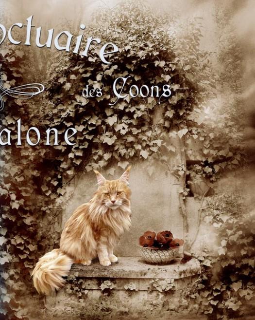 accueil_coon